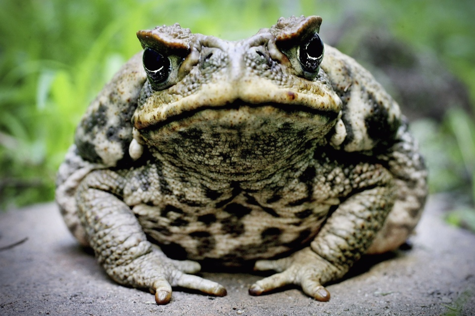 under-toad